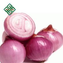 exporter des oignons frais de Chine