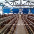 Cage de poulet automatique pour les couches ou les poulets de chair
