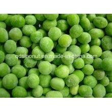 2015crop IQF Green Pea