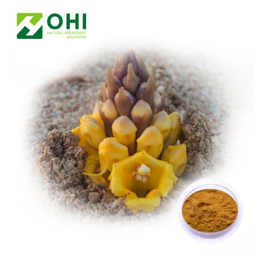 Cystanche Tubulosa Extract Verbascoside