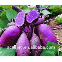 100% natürlicher purpurroter süßer Kartoffel-Extrakt, Süßkartoffel-purpurrotes Puder, 5% -80% Anthocyanin
