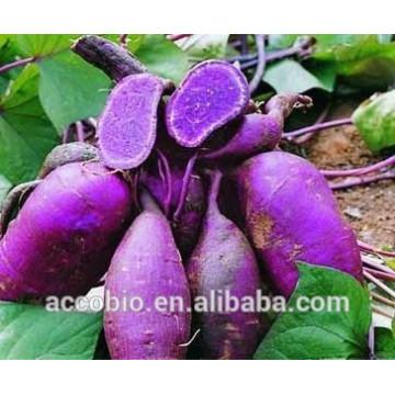 100% Натуральный Фиолетовый Сладкий Картофель Экстракт, Сладкий Картофель Фиолетовый Порошок, 5%-80% Антоцианов