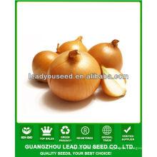 JON01 forme ronde vente très chaud graines de graines pour les prix des graines d'oignon