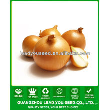 JON01 Round shape very hot sale planting seeds for onion seeds prices
