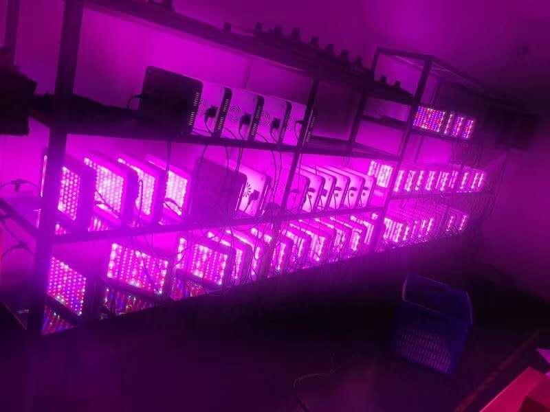 Sun Lamp For Plants