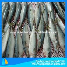 China Origin Frozen Mackerel Fish 300-500g