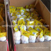 Carton Packing Chinese Fresh White Garlic