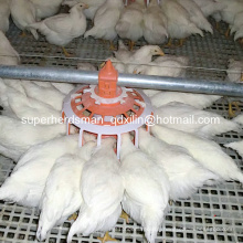 Automatic Poultry Farming Equipment for Breeder Farm House