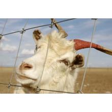 Fábrica que suministra el panel de la cerca del campo del prado / de la cerca del ganado