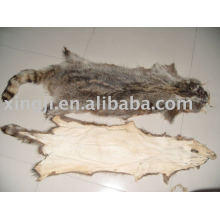 American Raccoon dog Skin