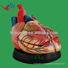 ISO Новый тип Jumbo Heart Anatomy Model, образовательная модель