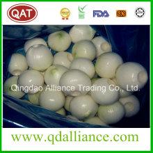 Fresh White cebolla pelada con paquete de vacío