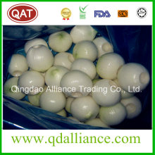 Fresh White Peeled Onion with vacuum Pack