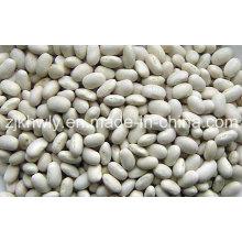 Small White Kidney Bean