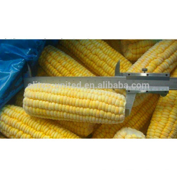 2015 frozen iqf sweet corn cob