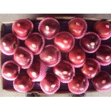 Экспорт стандартной упаковки Fresh Red Apple, Huaniu Apple