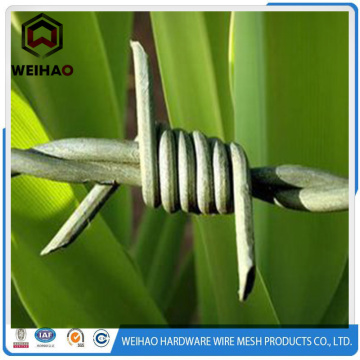galvanized stainless barbed wire