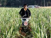 Modern Gear Transmission sugarcane agriculture machine tillage weeding machine