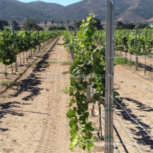 300g/m2 hot dipped galvanized metal poles for vineyards trellis