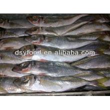 price frozen horse mackerel BQF