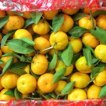 Стандарт качества экспорта свежий ребенок мандарин