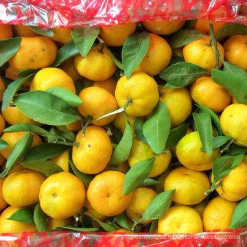 Exporting Quality Standard of Fresh Baby Mandarin