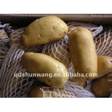 Forme ronde de pommes de terre fraîches