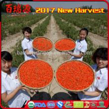 Fruit de miracle de baie de goji biologique Nourriture de régime de goji de Ningxia