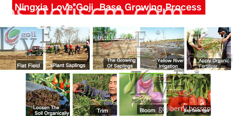Goji Berry Vitamins growing process