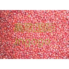 Exportation Nouvelle culture chinoise Bonne qualité Haricots rouges