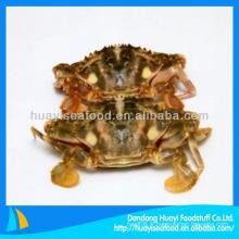 Nouvelle saison de crabe de boue congelée