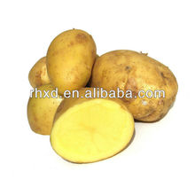 chinese new crop Holland fresh potato, cheap holland potato hot sale UAE