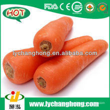 2014 fresh carrot supplier in China/chinese new carrot/chinese preminum carrot /chinese red carrots /fresh red carrot