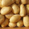 2016 New Crop Fresh Holland Potato