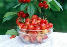 Fresh Organic Acerola Extract 17%VC