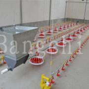 Poultry Farm Equipment for Sale
