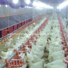 Full Set Automatic Poultry Breeder Raising Equipment
