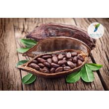 Herbes d'agrandissement de pénis produits de sexe fèves de cacao