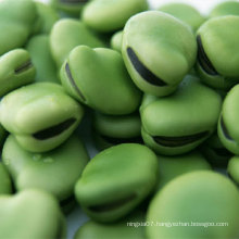 Hot Sale Broad Beans/horse bean/fava bean