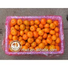 cítricos chinos (lista de frutos amarillos)