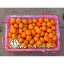 chinese citrus fruits (list of yellow fruits)