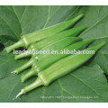 MOK011 Qiuhui high qulity hybrid okra seeds for sales