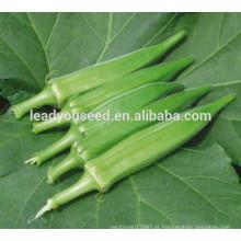 Sementes híbridas altas do quiabo do qulity de MOK011 Qiuhui para vendas