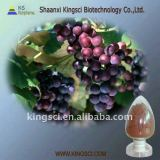 High quality Grape Seed P.E (High ORAC Value)
