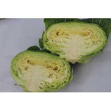price for cabbage in china