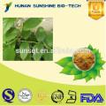 100% Natural uncaria gambir extract powder 5% Alkaloids