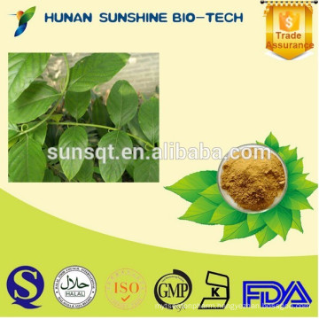 100% Natural uncaria gambir extract powder 5% Alkaloids