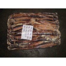 Meilleur Qualité Argenté Frozen Illex Squid