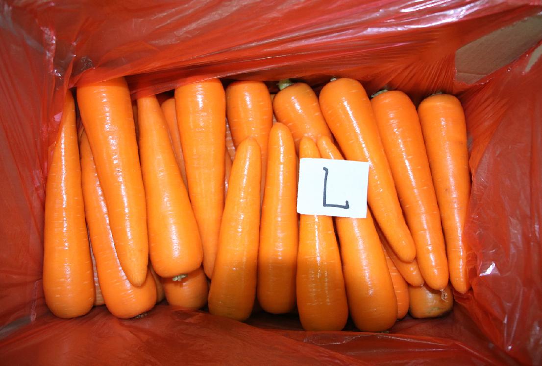 best carrot L