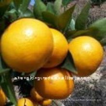 (NEU) CROP frische Orange Verpackung im Karton